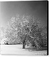 Black And White Winter Canvas Print by Thomas Fouch
