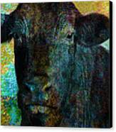 Black Angus Canvas Print
