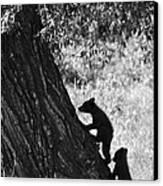 Black Bear Cubs Climbing A Tree Canvas Print