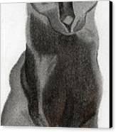 Black Cat Canvas Print by Bav Patel