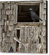 Black Crows At The Old Barn Canvas Print