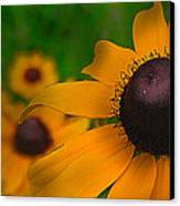 Black Eyed Susan Canvas Print by Brittany Perez