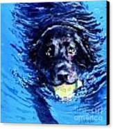 Black Lab  Blue Wake Canvas Print by Molly Poole