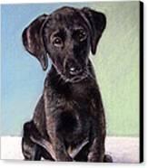 Black Labrador Puppy Canvas Print by Prashant Shah