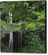 Black Pond And Maple Canvas Print by Colleen Williams
