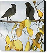 Black Ravens In Birch Canvas Print