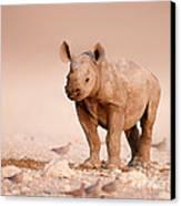 Black Rhinoceros Baby Canvas Print