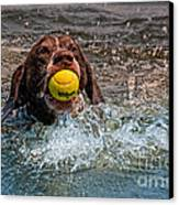 Blaze Retrieving Wilson 3 Canvas Print