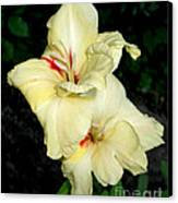 Bleeding Gladiola Canvas Print by M C Sturman