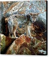 Blending In Nature Canvas Print by Karen Wiles