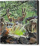 Blending In Canvas Print