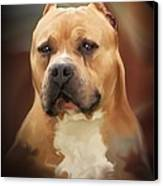 Blond Pit Bull By Spano Canvas Print by Michael Spano