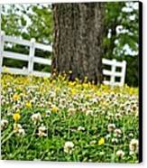 Bloom Gathering Canvas Print by Beverly Hammond