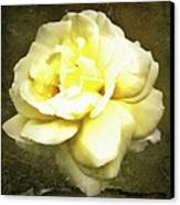 Bloom In Full Canvas Print by Cathie Tyler