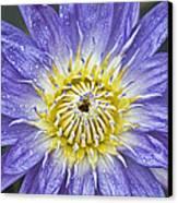 Bloom Canvas Print by Karen Walzer