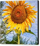 Blooming Sunflower V2 Canvas Print by Adrian Evans