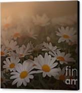 Blossom Canvas Print by Sylvia  Niklasson