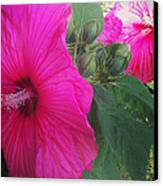 Blosssoms And Buds Hibiscus  Canvas Print by Brittany Perez