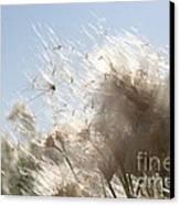 Blow Me Away Canvas Print by Julie Lueders