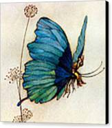 Blue Butterfly II Canvas Print by Warwick Goble