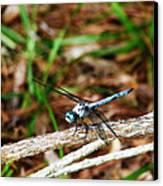 Blue Dragonfly Beauty Canvas Print by Ella Char