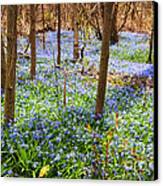 Blue Flowers In Spring Forest Canvas Print