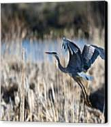 Blue Heron 1 Canvas Print by Roger Snyder