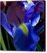 Blue Iris Canvas Print by Joann Vitali