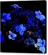 Blue Lace Cap Hydrangea  Canvas Print