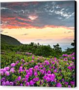 Blue Ridge Parkway Sunset - Craggy Gardens Rhododendron Bloom Canvas Print by Dave Allen