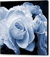 Blue Roses With Raindrops Canvas Print
