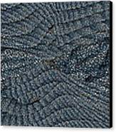 Blue Sheets Canvas Print by Tim Allen