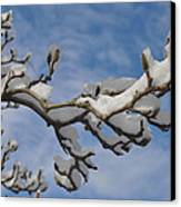 Blue Skies In Winter Canvas Print by Bill Cannon