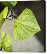 Blue Violet With Triangles Canvas Print by Rebecca Sherman