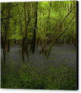 Bluebells Dream Canvas Print by Peter Skelton