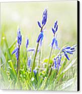 Bluebells On The Forest Canvas Print