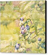 Blueberries Painted On The Wall Canvas Print by Alanna DPhoto