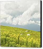 Blueberry Field And Goldenrod With Dramatic Sky In Maine Canvas Print by Keith Webber Jr