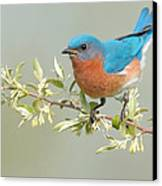 Bluebird Floral Canvas Print by William Jobes
