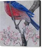 Bluebird In Cherry Blossoms Canvas Print by Sandy Clift