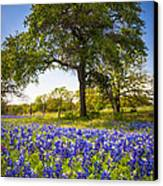 Bluebonnet Meadow Canvas Print