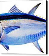Bluefin Tuna Canvas Print by Carey Chen