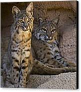 Bobcat 8 Canvas Print