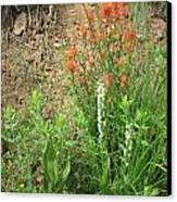 Bog Orchid Red Paintbrush On Mt A Canvas Print by Dan A  Barker
