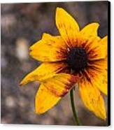 Bold Yellow Flower Canvas Print