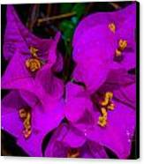 Bougainvillea Matte Touch Canvas Print by Lisa Cortez