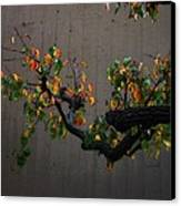 Bouquet From Autumn Leaves.three. Canvas Print