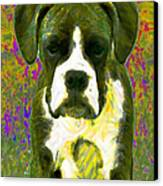 Boxer 20130126v2 Canvas Print by Wingsdomain Art and Photography