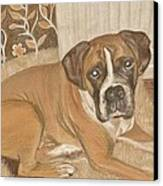 Boxer Dog George Canvas Print by Faye Symons
