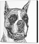 Boxer Dog Sketch Canvas Print